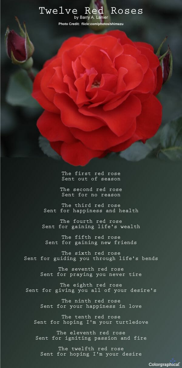 Twelve Red Roses - Number of roses meaning and symbolism